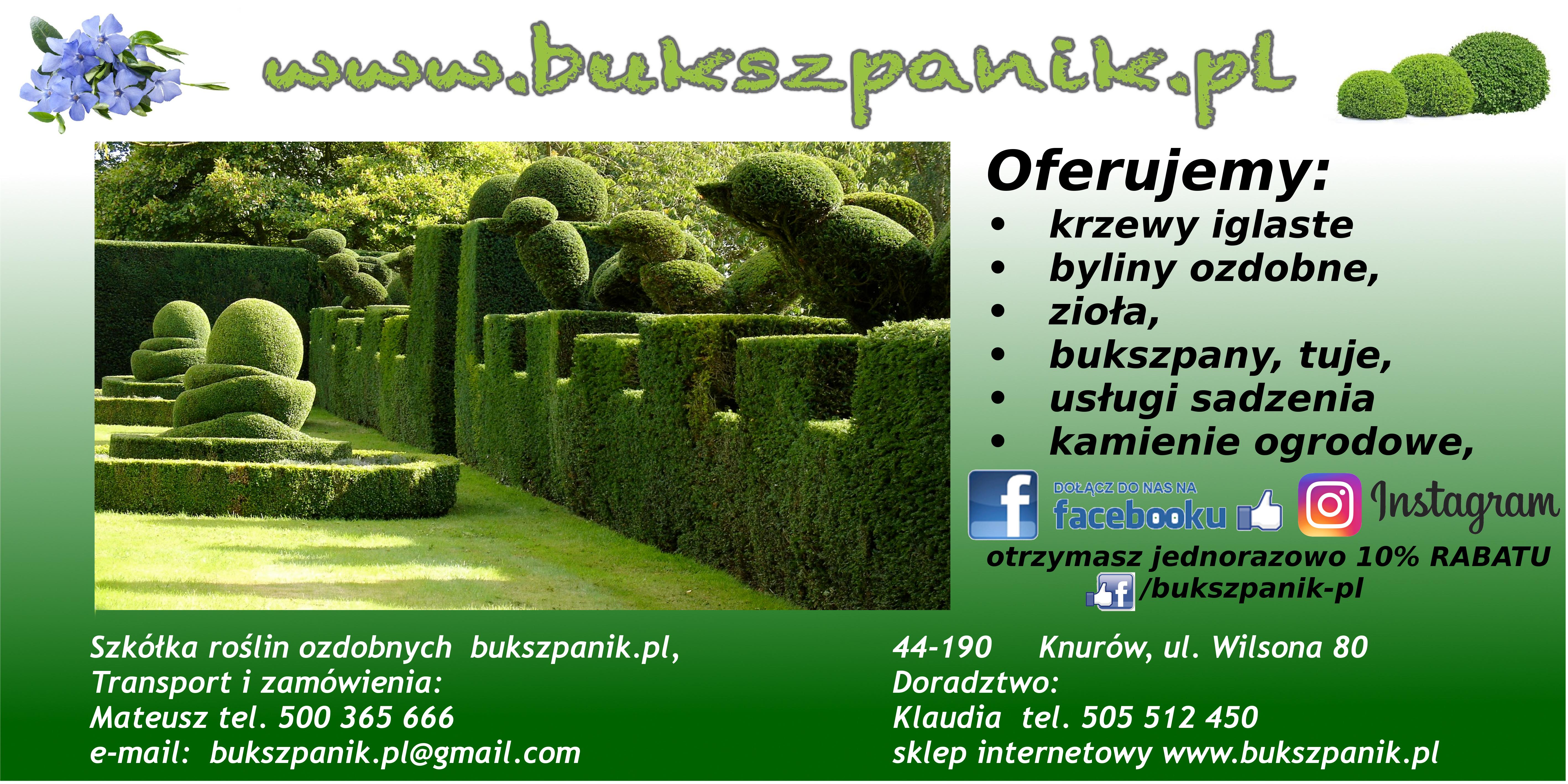 Bukszpanikpl Gospodarstwo Szkółkarskie